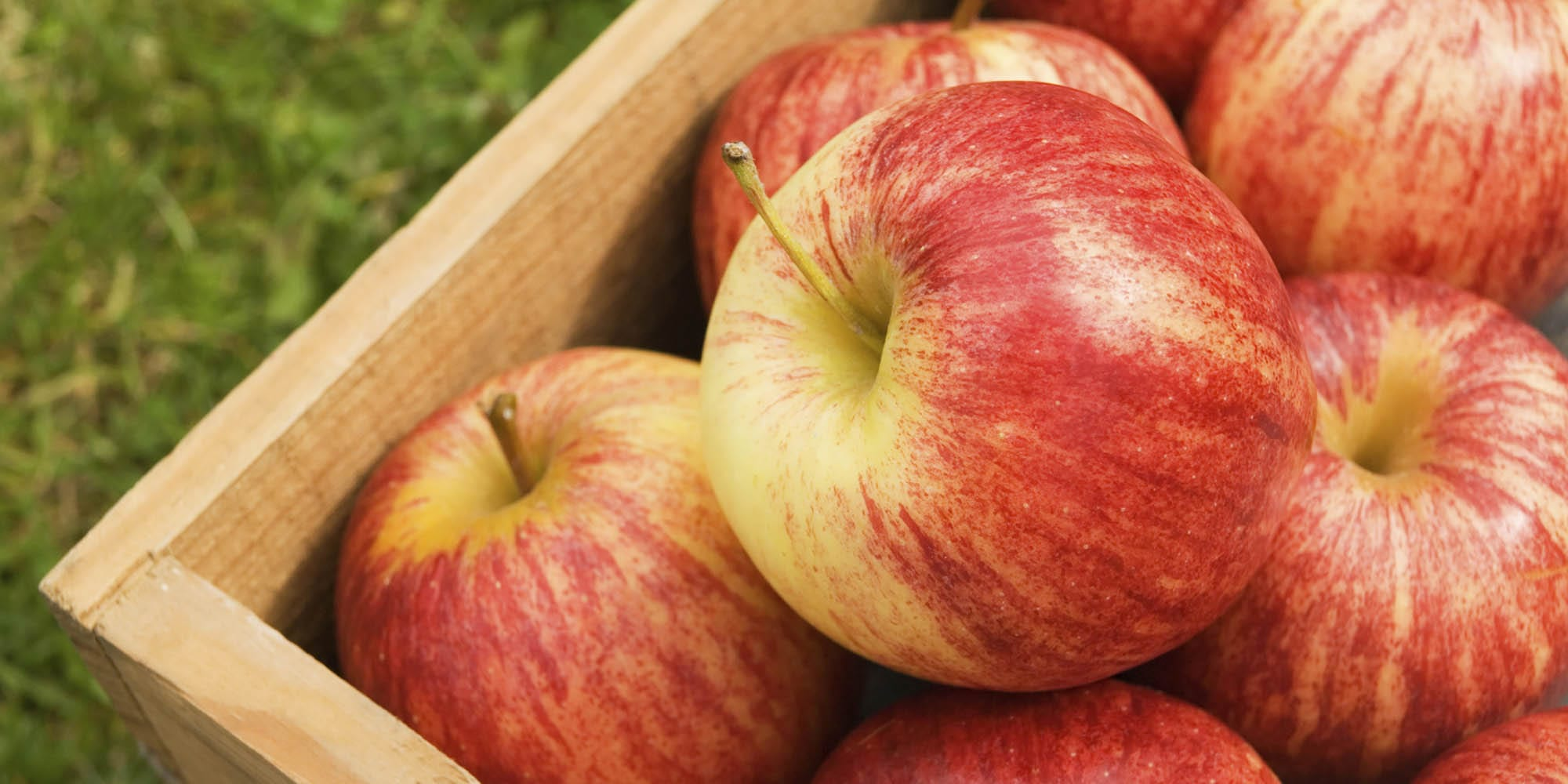 A Guide to the Most Popular Apple Varieties