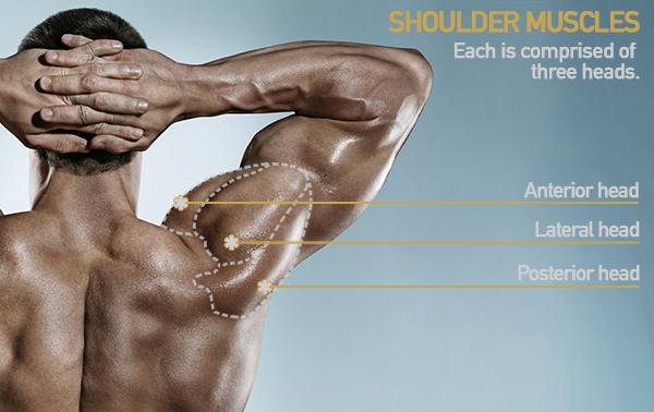 shoulder heads deltoid | shoulder workout for mass