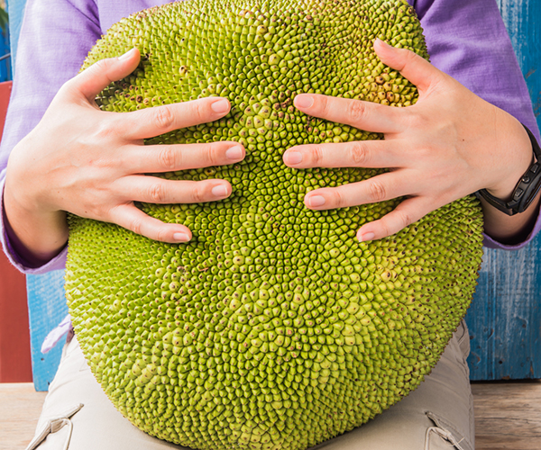 Person holding a huge jackfruit in their lap