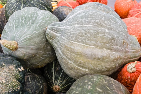 7 Winter Squash Varieties to Try - Hubbard Squash