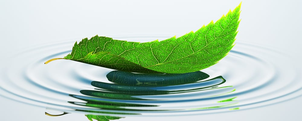 mindfulness exercises | leaf water ripples