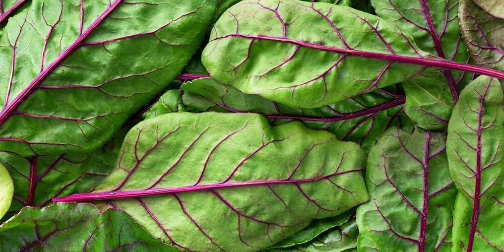 swiss chard mangold | foods high in potassium