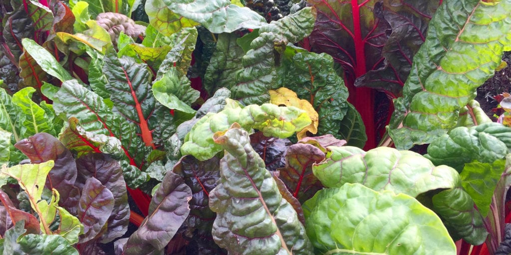 swiss chard leafy greens foods high in calcium