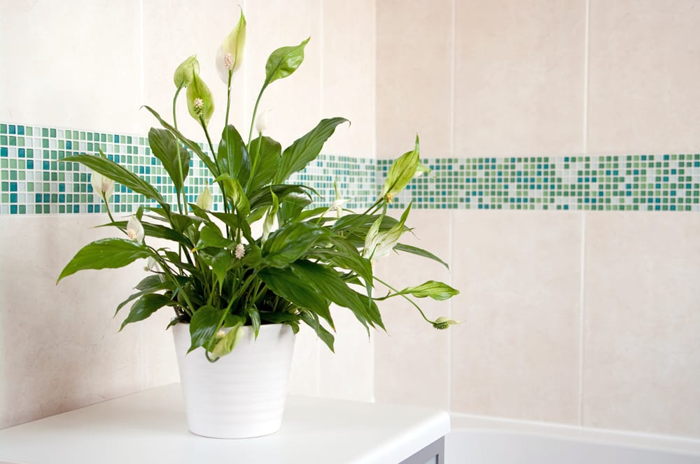 Easiest Houseplants