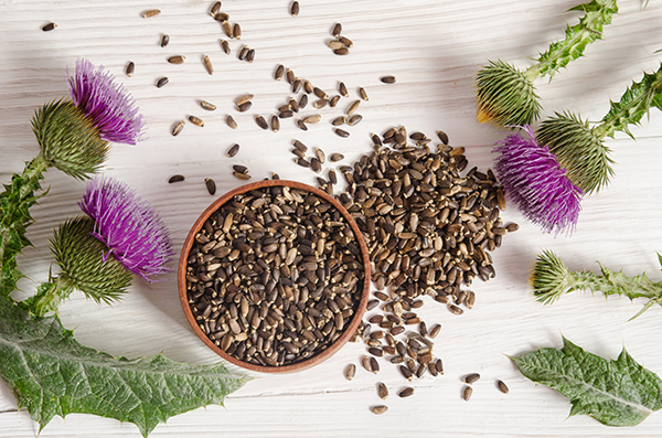 Milk Thistle Seeds -- Benefits
