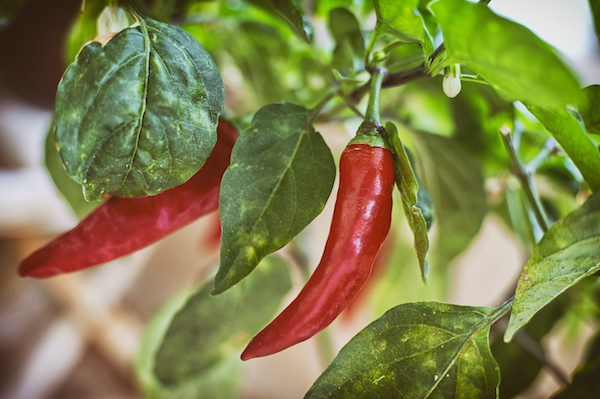 weight-loss-foods-peppers