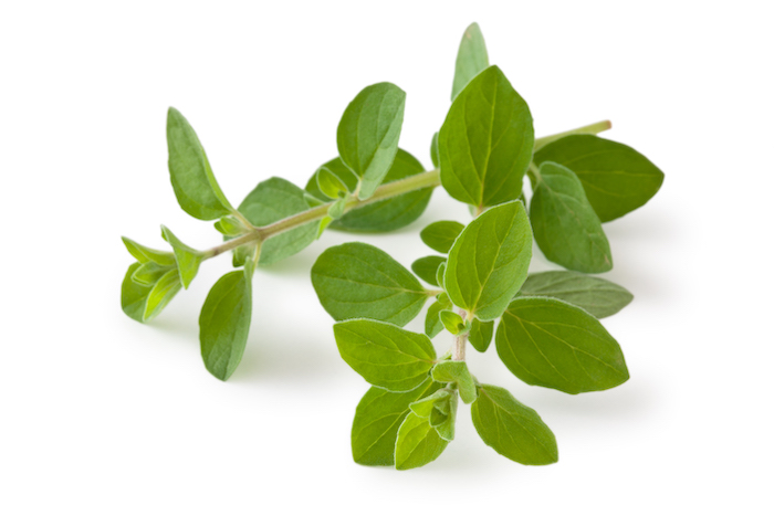 oregano- herbs for weight loss