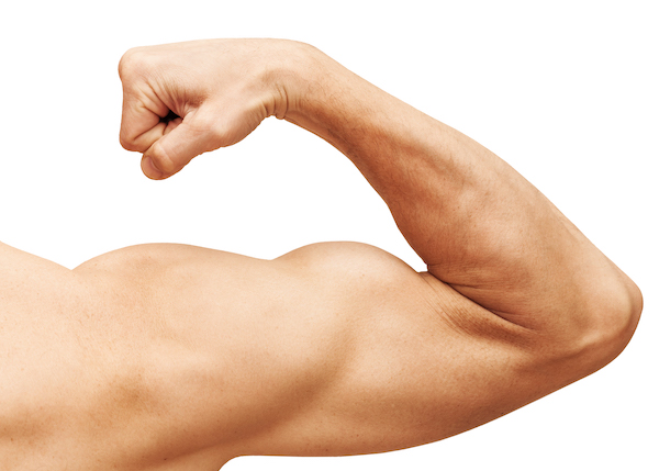 arm muscles- bicep
