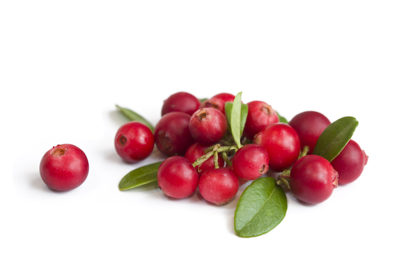 cranberry nutrition- cranberries