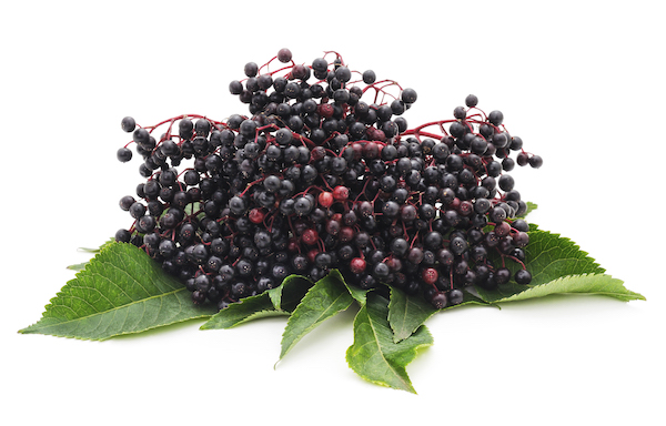what is elderberry- elderberry fruit  - elderberrry cluster