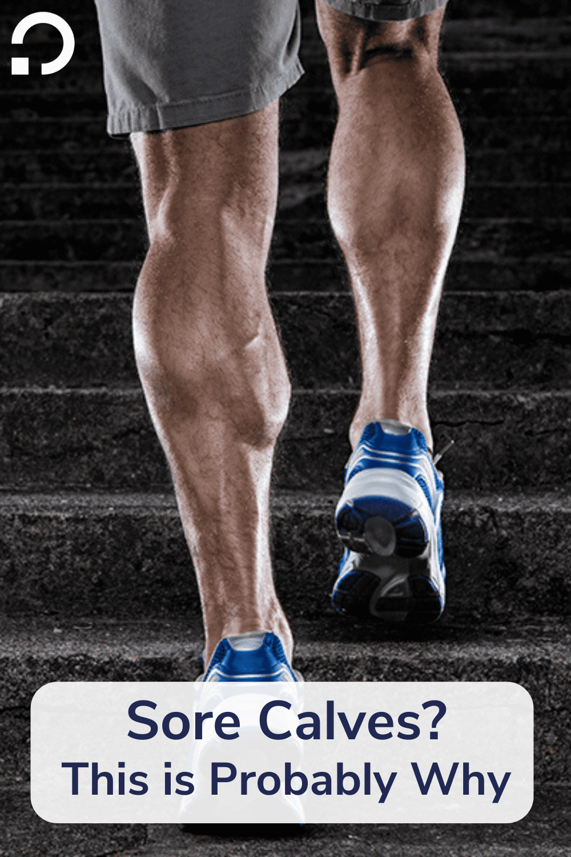 calf anatomy pin image