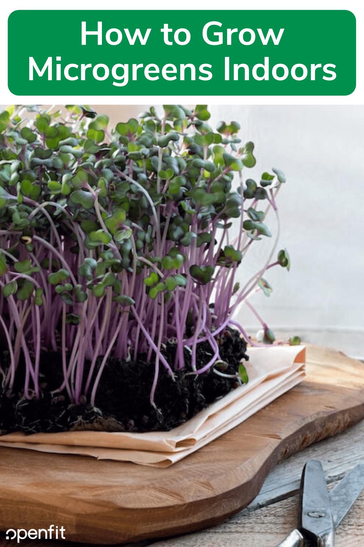 grow microgreens indoors - pin image
