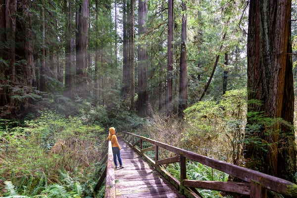 best hikes in california - redwood park