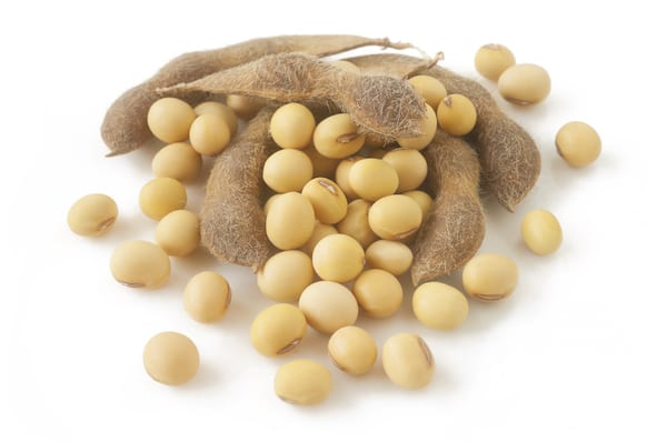 pea vs soy protein - soy beans