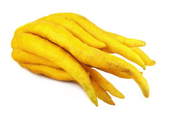 buddhas hand - buddhas hand fruit