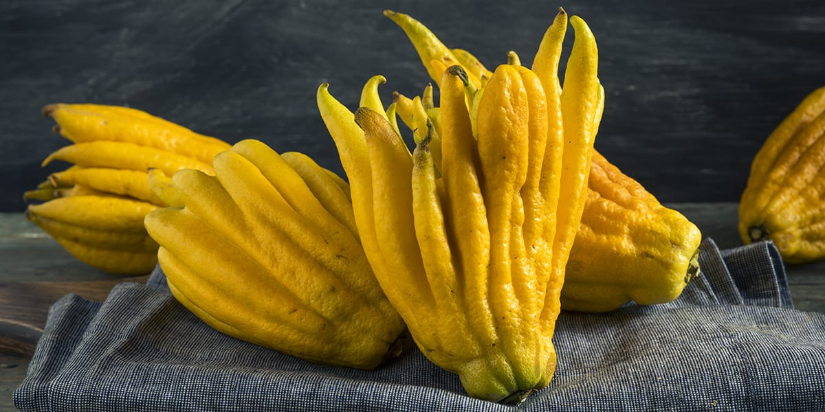 What to Do With Buddha's Hand Fruit | Openfit
