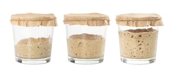 how to make sourdough starter - starter growing