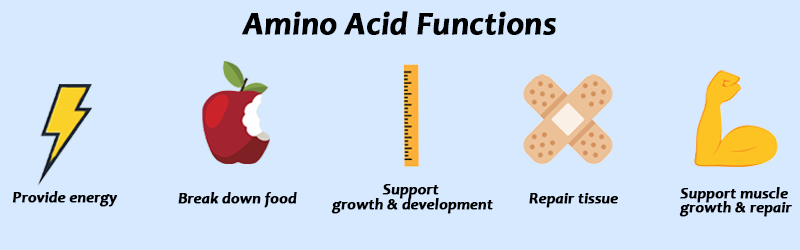 amino acid functions graphic | amino acids